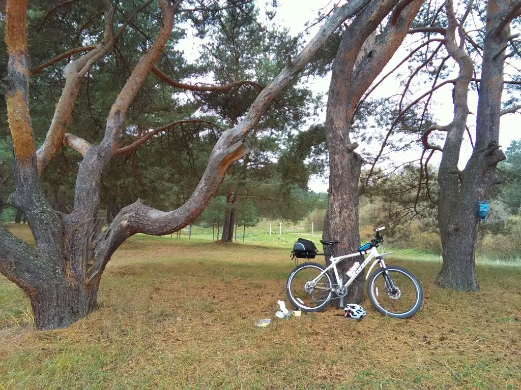 My bike near a pine tree